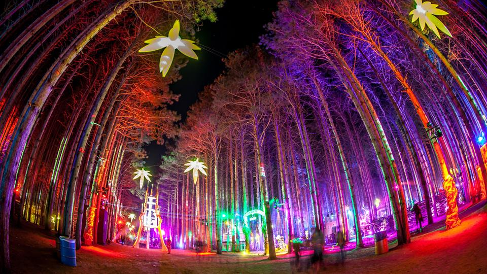Electric Forest Organizers Planning New Festival In Colorado